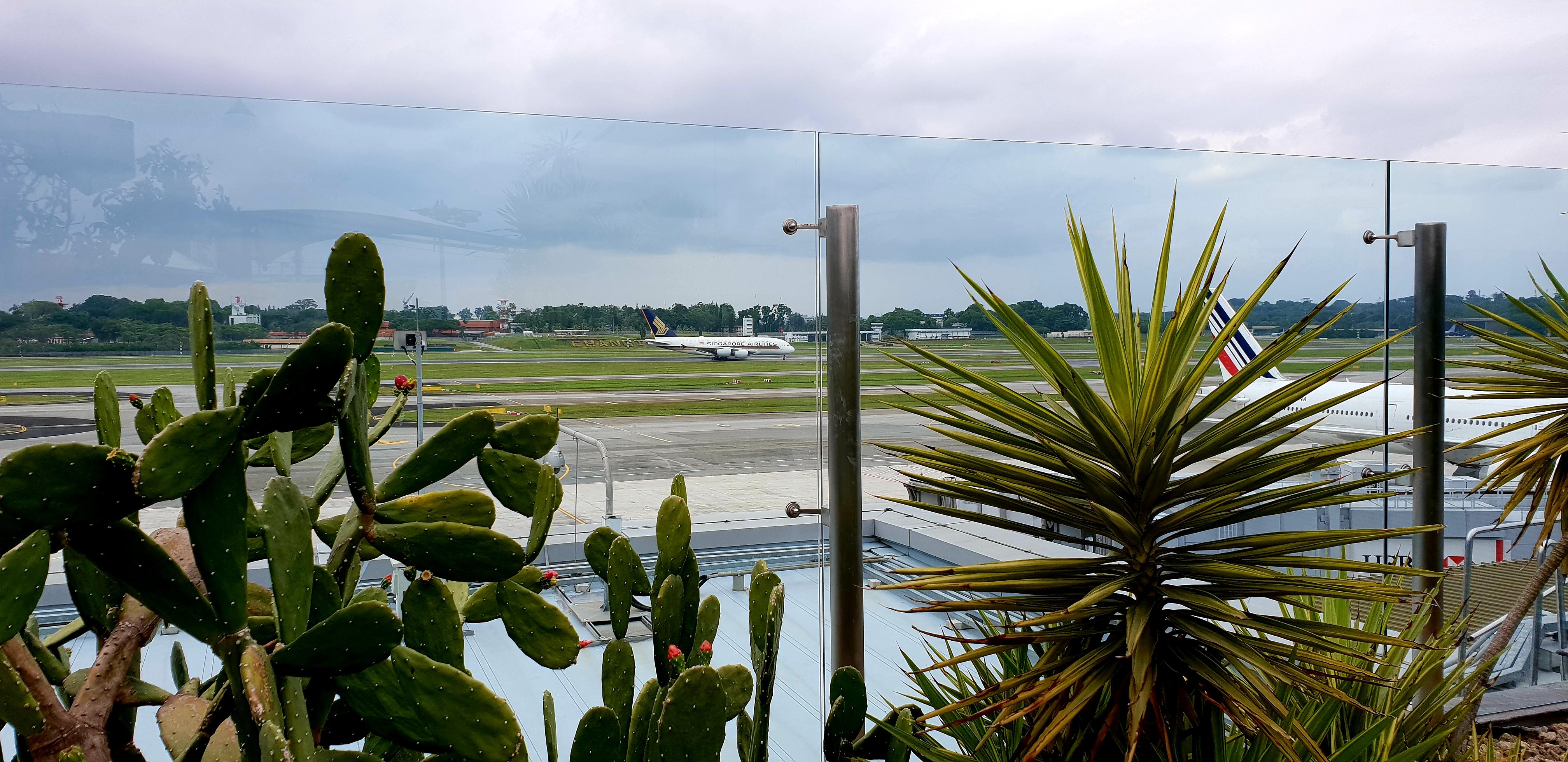 Cactus Garden Changi Airport