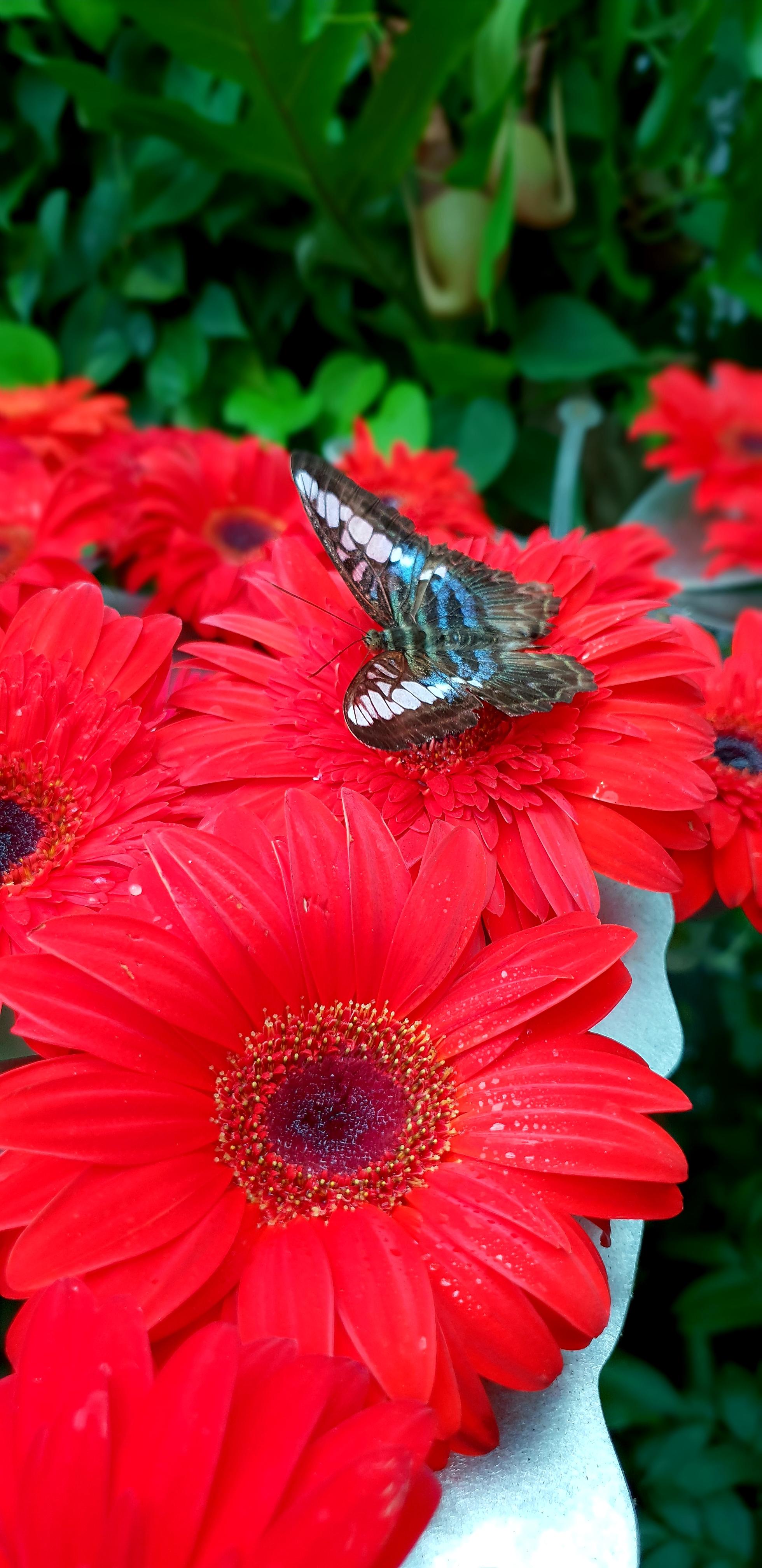 Butterfly Garden Changi
